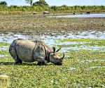 Free Photo: Rhino poaching in Assam for precious horns reduces by 86 %