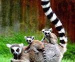CHINA JIANGSU SUZHOU ANIMALS