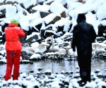 Rongcheng (China): Migratory swans