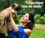 Roposo, NGO to spread awareness about pet adoption ()
