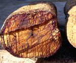 Cong seeks judicial probe into 'illegal' tree felling in Kerala