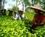 'Run For Tea' march to promote tea marketing, industry