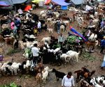 : Kolkata: Sacrificial animals being sold  ahead of Eid al-Adha