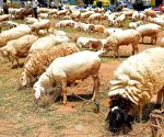 71 sheep to compensate eloping wife