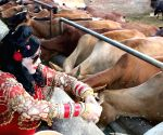 Radhe Maa feeds cows