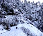 Manali, Kalpa see more snowfall