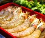 File Photos: Shrimps