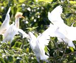 CHINA JIANGSU WETLAND EGRETS