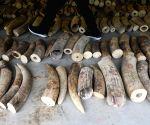 SINGAPORE SEIZURE ELEPHANT IVORY PANGOLIN SCALES