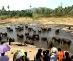 Sri Lanka to conduct elephant census  after 10 years