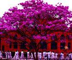 File Photo: Karnataka State Central Library