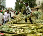 Sugar output up by 8% till January