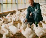 Dutch poultry industry to share expertise with India