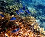 File Photos: The Great Barrier Reef