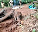 Kerala elephant death: An