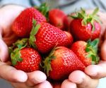 Eat strawberries, oranges daily to cut risk of cognitive decline