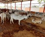 Jail inmates to take care of cow shelters in UP