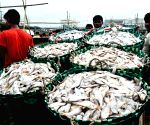 50,000 tonnes of stale fish seized and destroyed in Kerala