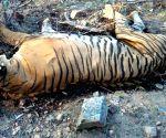 Tigress found dead in Dudhwa Tiger Reserve