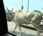 To beat fuel price blues, traders take to bullock carts in TN