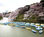 JAPAN TOKYO CHERRY BLOSSOMS