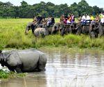 Tourists riding on elephants watch a one-horned rhinoceros