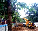 Trees trans-located for widening of roads