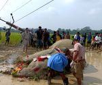 Two unnatural deaths of elephant in Assam in 10 days