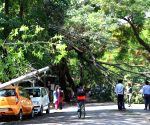 Heavy rains leave trees uprooted
