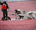 Vancouver (Canada): Richmond is the largest producer of cranberries in Canada