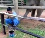 Video of baby elephant playing with man goes viral