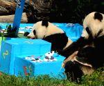 AUSTRIA VIENNA GIANT PANDA BIRTHDAY