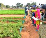 National Horticulture Fair 2020