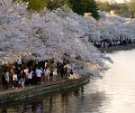 U.S.-WASHINGTON D.C.-CHERRY BLOSSOM