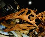 "Washington D.C.: An exhibition ""Spinosaurus: Lost Giant of the Cretaceous"""