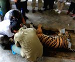 INDONESIA-WEST SUMATRA-GLOBAL TIGER DAY