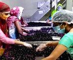 Widening the market for Nashik-based jamun agroforestry