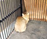 Wild cats pair rescued in Telangana poultry farm