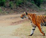 Wildlife exhibition in urban jungle
