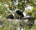 First-of-its-kind study finds storks prefer canals over wetlands