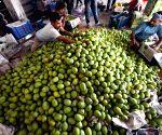 Bhagalpuri Malda' mangoes being packed for exports
