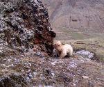 CHINA QINGHAI QILIANSHAN WILD ANIMAL