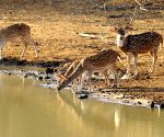 Yala National Park drought