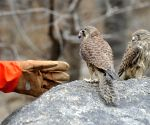 Yinchuan (China): Trafficked falcon