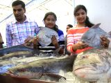 Visitors at Matsya MelaFish Fairorganised by Karnataka government in Bengaluru, on Dec 8, 2017.
