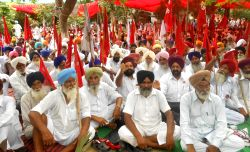 Farmers demonstrate against Parkash Singh Badal led Punjab Government in Amritsar on Aug 11, 2014.