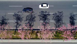 CHINA-FUJIAN-QUANZHOU-KAPOK FLOWERS