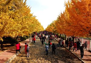 CHINA-LIAONING-GINKGO SCENERY