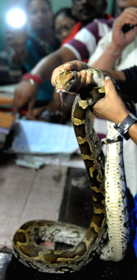 A rock python that was rescued from Hatey Bazare Express at Sealdah Station in Kolkata, on Aug 10, 2016.