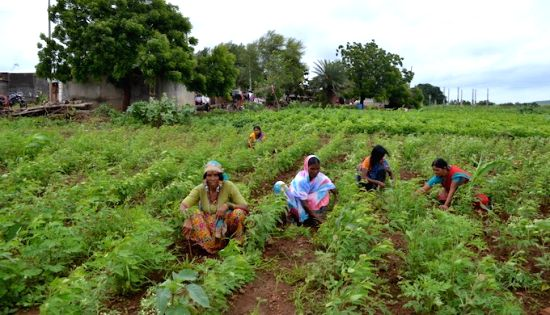 Women in Marathwada are using the one-acre model to practice sustainable agriculture. (Photo by Swayam Shikshan Prayog)